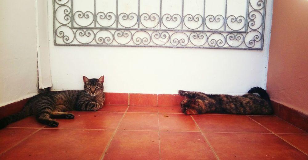 Chillcats Cats Marokko Heat Schlummern Miezen
