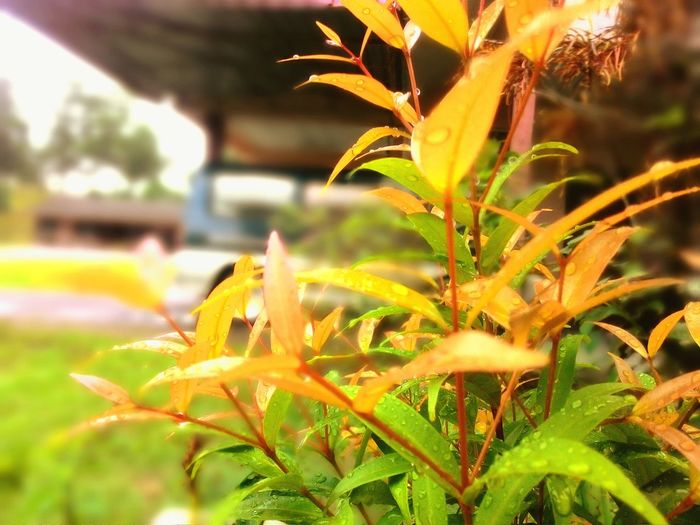 Sq_photo Leaf 🍂 Plant Nature Outdoors Botany Beauty In Nature Selective Focus First Eyeem Photo