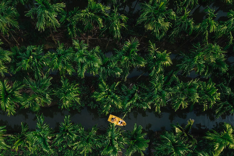 High angle view of yellow boat in river amidst trees