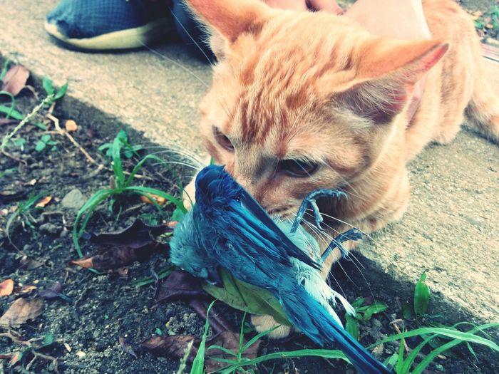 Cats Of EyeEm Catslover Cats 🐱 Taking Photos Catch The Moment Cat Catching Squad I Love My Cat I Love Taking Pictures <3