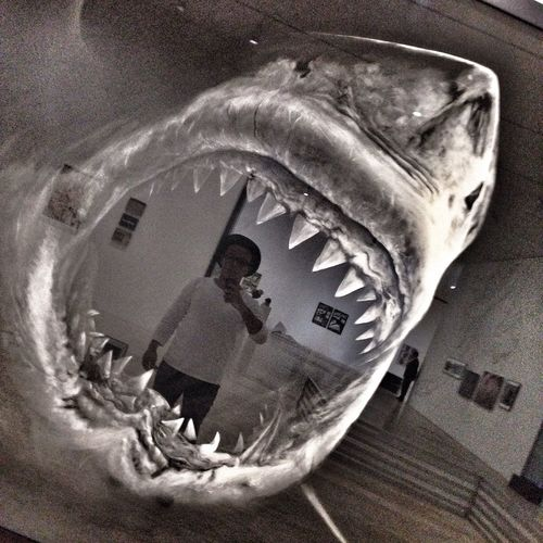 Jaws. 💀