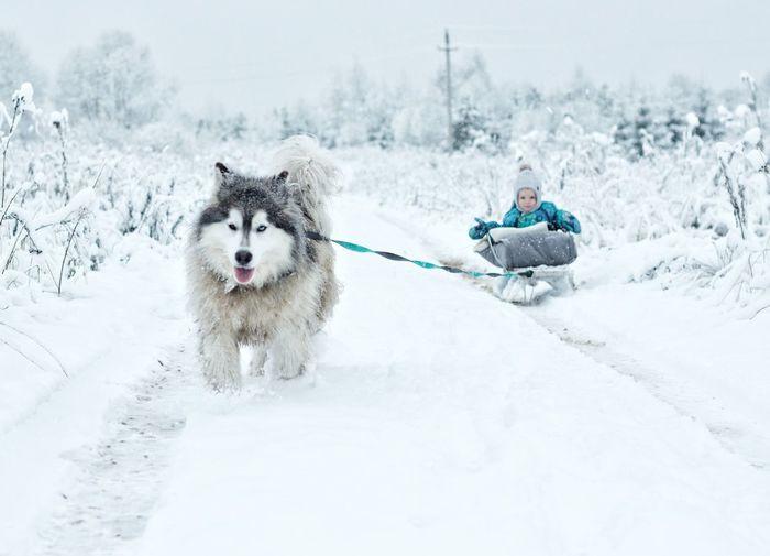 Dog on snowcapped landscape during winter