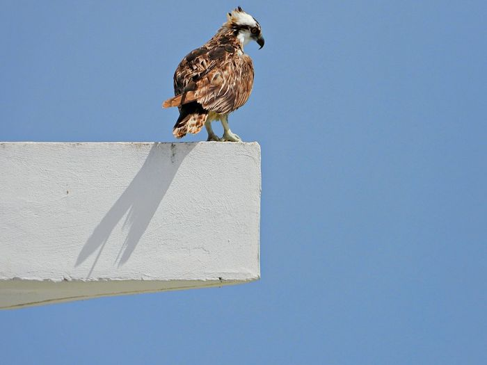 Low angle view of bird perching against the sky