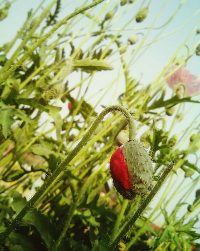 Showcase March Flowerbud Bud Flower Ready2bloom Nature Nature Beauty Floralphotography Flora Garden Plant Smartphonephotography 5mpcamera
