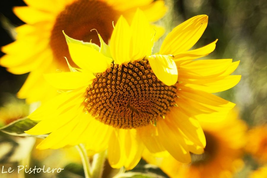 pour ma fille Aurélie , bon anniversaire ! Flowers Eye Em Nature Lover Don Filter Yellow Flowers