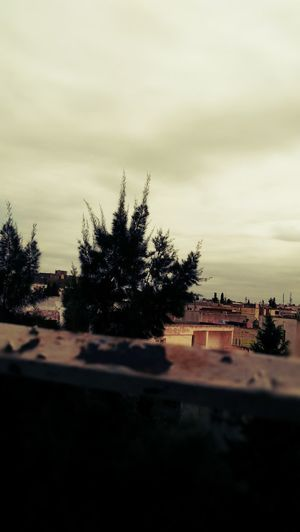 Feel The Cloud Tree Road Sky