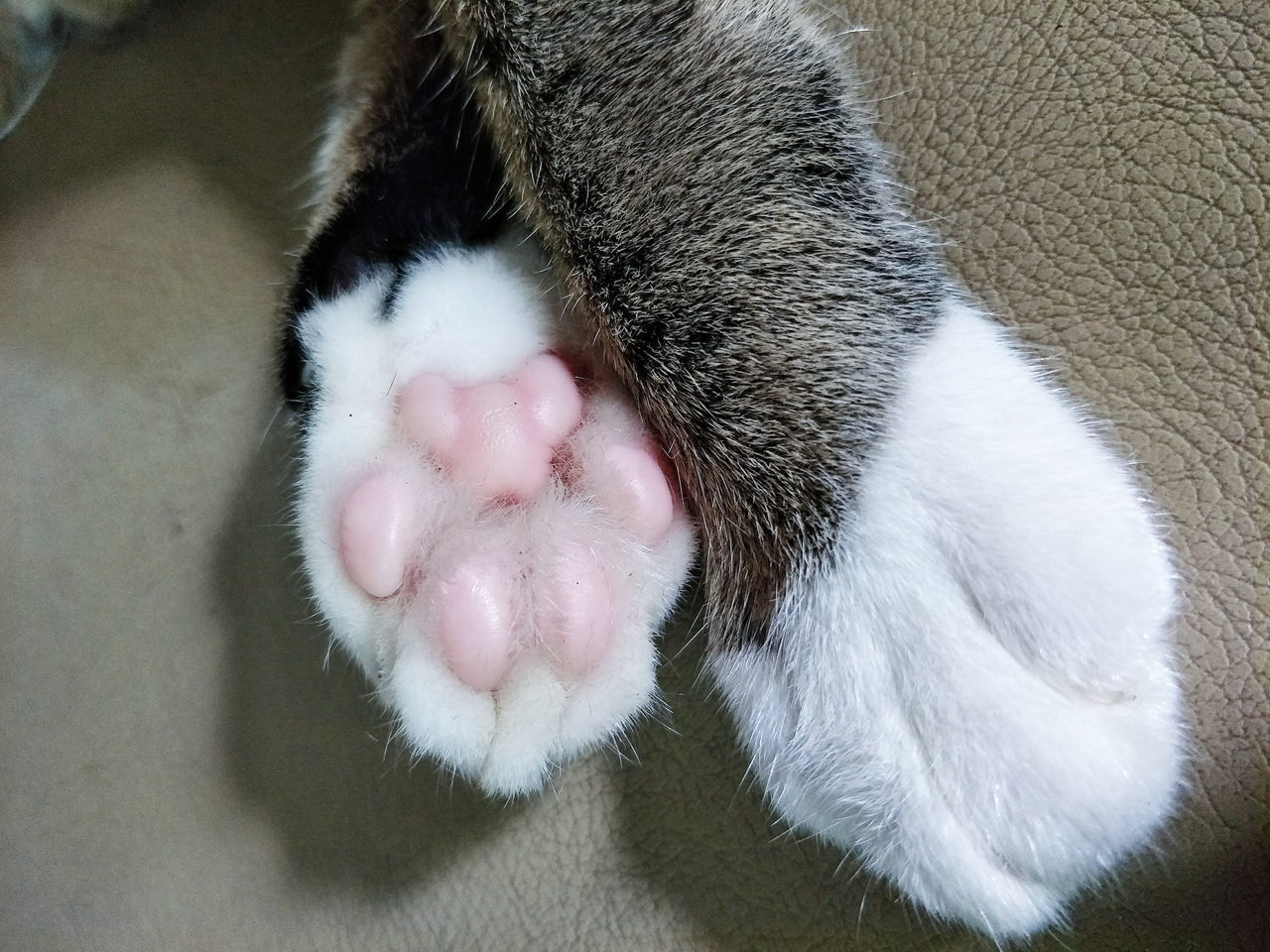 domestic, mammal, animal, pets, animal themes, domestic animals, one animal, cat, vertebrate, feline, domestic cat, relaxation, sleeping, close-up, animal body part, indoors, no people, paw, high angle view, resting, animal leg, animal head, whisker, animal mouth