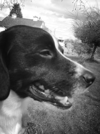 Pets My Dog Black And White Photography ¡Eyeem Addict!