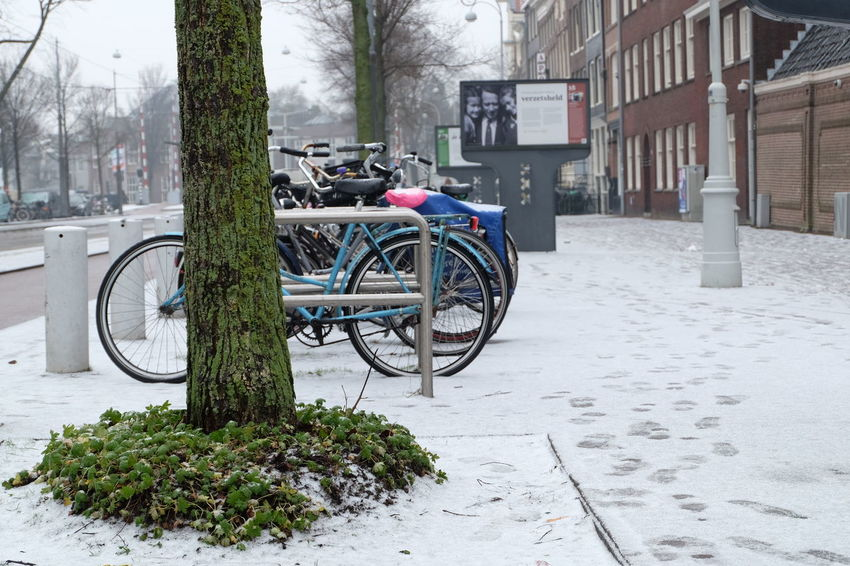 Parked bikes on a snowy day with a tree and graan undergrowth in the foreground. Bicycle City Cold Cold Temperature Day Footprints In The Snow Netherands No People Outdoors Snow Transportation Tree Waterlooplein Winter