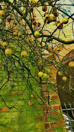 Historical Building Green Apples Taking Photos Apple Tree