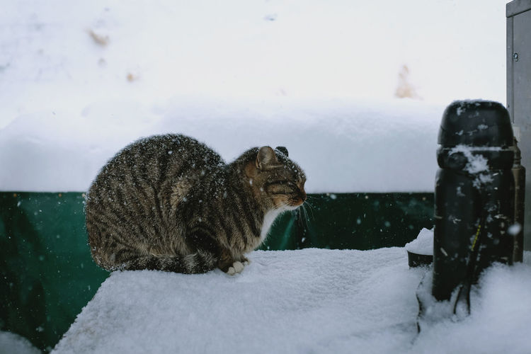 Cats Of EyeEm Shades Of Winter Animal Themes Animal Wildlife Animals In The Wild Cat Cat♡ Close-up Cold Temperature Day Mammal Nature No People One Animal Outdoors Sky Snow Weather Winter