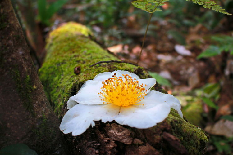 Nature at Phu Kradueng National Park Easter Eastern Purple Coneflower Nature Photography Nature Thailand Wallpaper Beauty In Nature No People Day Flower Head Flower UnderSea Closing Living Organism Insect Close-up Animal Themes Landscape Plant Moss Butterfly - Insect Fungus Wildflower Fly Agaric Symbiotic Relationship