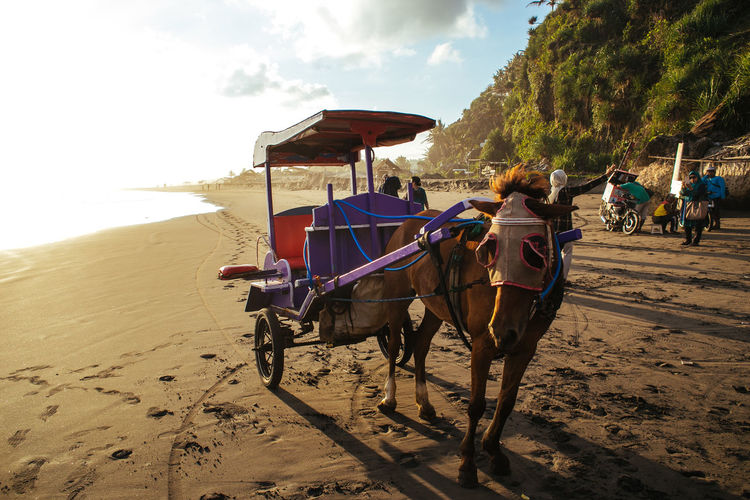 #beach #ExploreJogjakarta #horse #horsecar #indonesia #beach #pangandaran #Jogjakarta #parangtritis #sunset #sun #clouds #skylovers #sky #nature #beautifulinnature #naturalbeauty #photography #landscape Bridle Domestic Animals Full Length Herbivorous Horse Horse Cart Horseback Riding Livestock Mammal Mode Of Transport One Animal Riding Sand Sky Transportation Two Animals Working Animal
