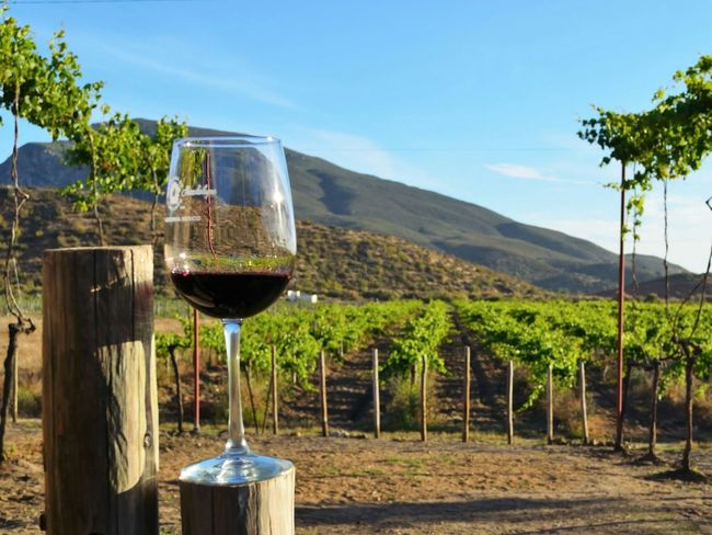Vineyard Winecountry Mexico Glass Rustic Vines Fields Red Wine
