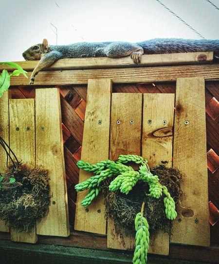 Squirrel Squirellove Leisure Activity Squirellsrcute Nature urbanwildlife