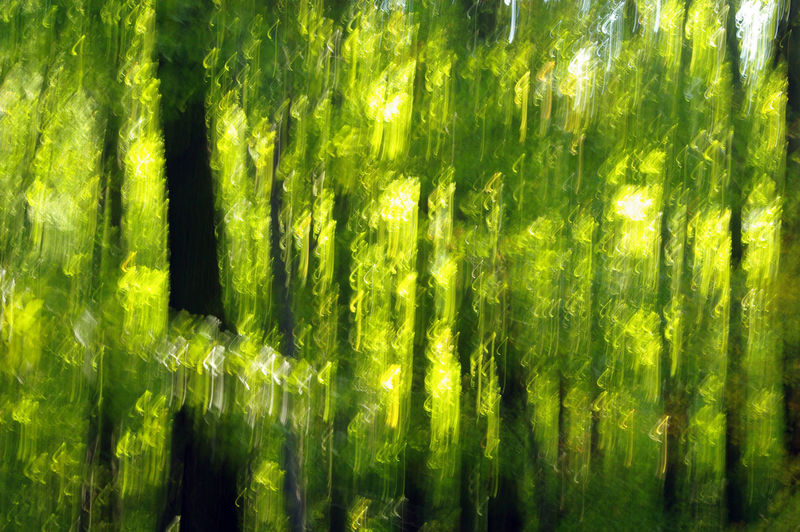Green Trees Abstract Forest Impressionism Trunks