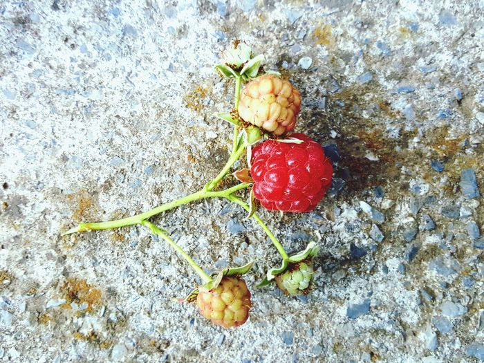 raspberry Raspberry Cement Conctrete Ripening Red Green Unripe Unripe Fruit Strawberry Berry Summer Sweet Flower Red Fruit Close-up Food And Drink