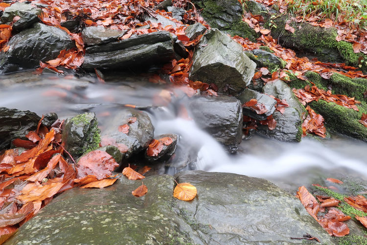 Autumn Creek Flowing Flowing Water Nature Nature Photography Rock Day Fall Leaves Long Exposure Nature No People Outdoors Rock - Object Scenics Season  Source Source Of Water Stone Water Waterfall Wet
