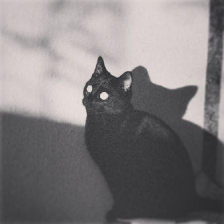 Czo ten koteł? :o Koteł Wygrzebka Nina Duzie Oczy WOW Takasytuacja