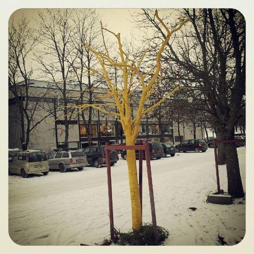 Yellow Tree Gule Tre i ås akershus norge norway torget