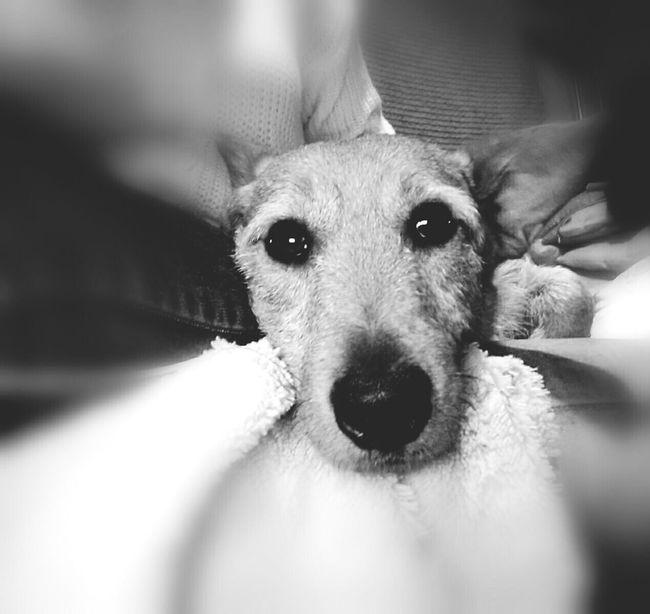 Lovemydog 🐕 Storm Frightened  Blackandwhite