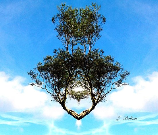Floating Tree of Love....... Photo Art Tree Art Tree And Sky My Own Photography Trying New Things Spiritual Heart ❤ Hello World Mirrored Image Ilovenature