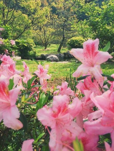VSCO Cam Flowers WA 禅 Zen Japanese
