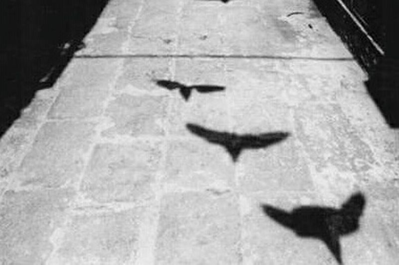Birds Shadow Streetphoto_bw Blackandwhite Streamzoofamily EyeEm Gallery Black & White Photography