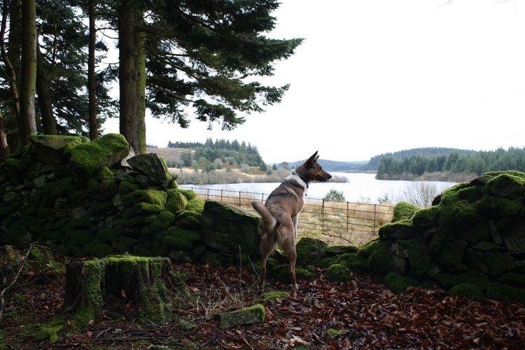 Alwen Dam Dog