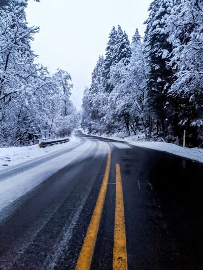 Surface level of road amidst trees during winter