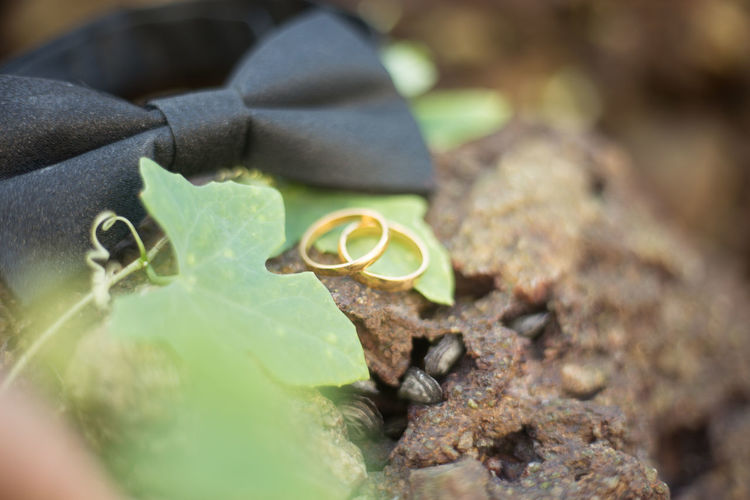 wedding props pack shot of wedding ring accesories Animal Themes Animal Wildlife Animals In The Wild Close-up Day Emotion Green Color Growth Leaf Leaves Metal Nature No People Outdoors Plant Plant Part Rock Rock - Object Selective Focus Solid Tree