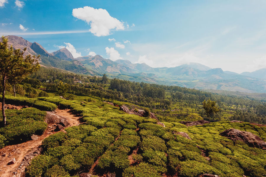 ASIA Munnar Munnar Kerala MunnarHillstation Travel Travel Photography Beauty In Nature Cloud - Sky Day Green Color Growth Indien Kerala Landscape Mountain Mountain Range Nature No People Outdoors Scenics Sky Tea Crop Tranquil Scene Tranquility Tree