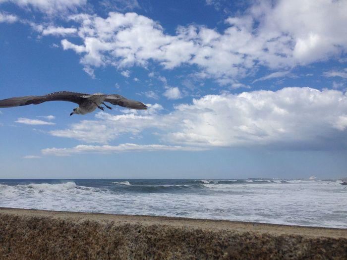 Echar el vuelo y descubrir un mundo con otra firma de ver Gaviota Praia Volar Crecer Observar Cielo