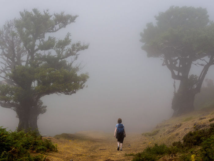 Rear view of people walking on tree against sky
