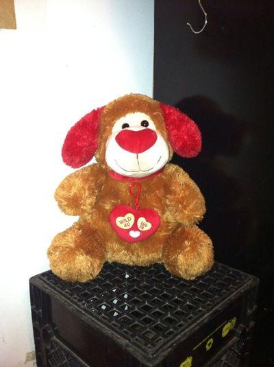 Myii Teddy
