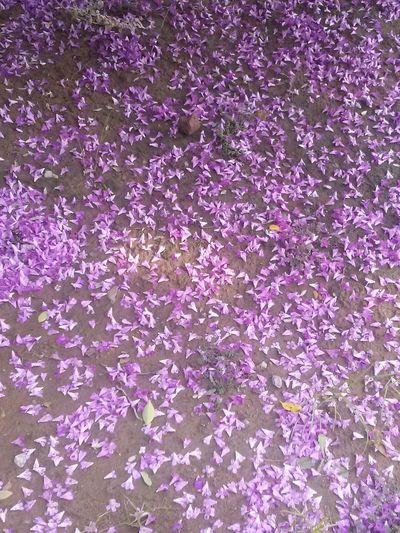 Purpel flowers