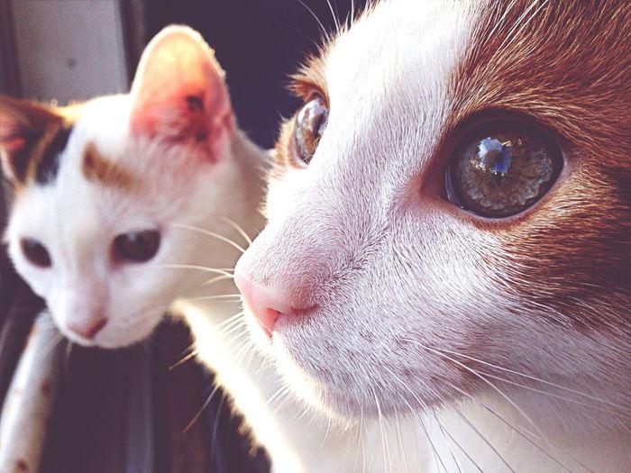 Cats Kitten Depth Of Field Animals
