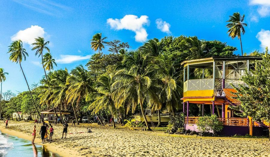 Palm Tree Caribbean Beach Outdoors Day Nature Sky Tree Beach Time First Eyeem Photo