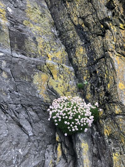 Close-up of flowering plant growing on rock