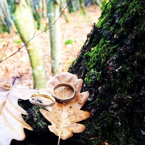 - Promenade into the Wood - avec Sylou ❤️🍂🍃 Séance photo en souvenir de cette magnifique année ! En souvenir de notre mariage woodland 🍁 Instalove Ring Dimanche Love Wedding Woods Intothewood Amour Bonheur