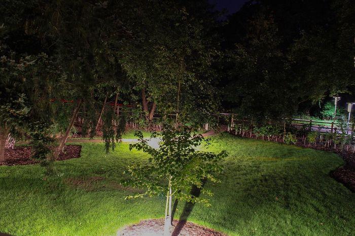 Long exposure, nightime Long Exposure Nature Outdoors No People