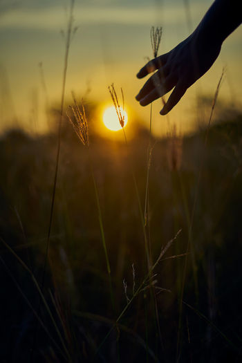 Close-up of hand holding dandelion against sky during sunset