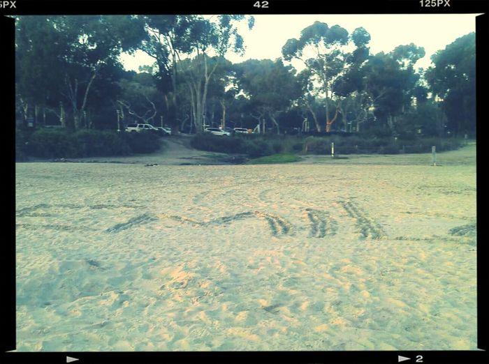 Beach In Cali