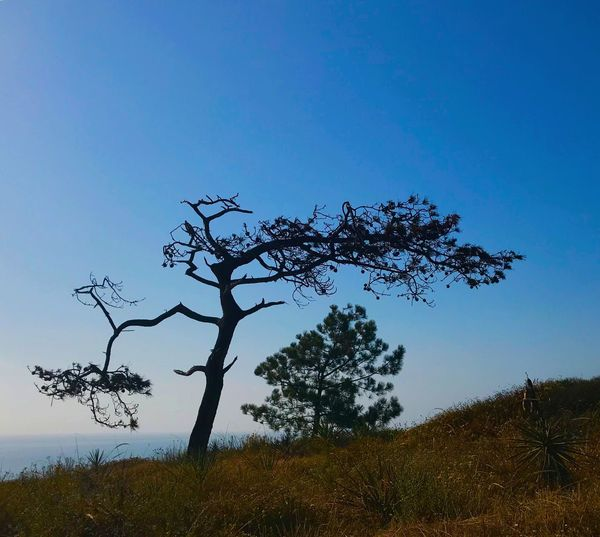 Tree Landscape Nature Beauty In Nature Tranquility Outdoors No People Growth Tranquil Scene Blue Day Sky Field Clear Sky Branch Lone Scenics Grass Bare Tree IPhoneography IPhone7Plus