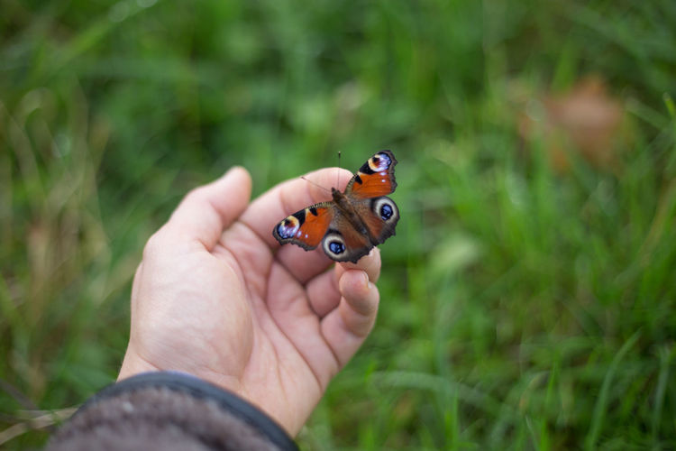 Grass Nature Nature Photography Butterfly Butterfly - Insect Close-up Colorful Colourful Butterfly Day Grass Holding Human Hand Ladybug Men Nature Naturelovers One Person Outdoors Park People Real People