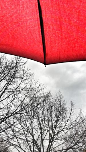 rayny day everyday in Rome Wearhertime Weather Rain Roma TheCity Nature Umbrella Redumbrella Trees Cloudy Redumbrella Umbrella Winter First Eyeem Photo