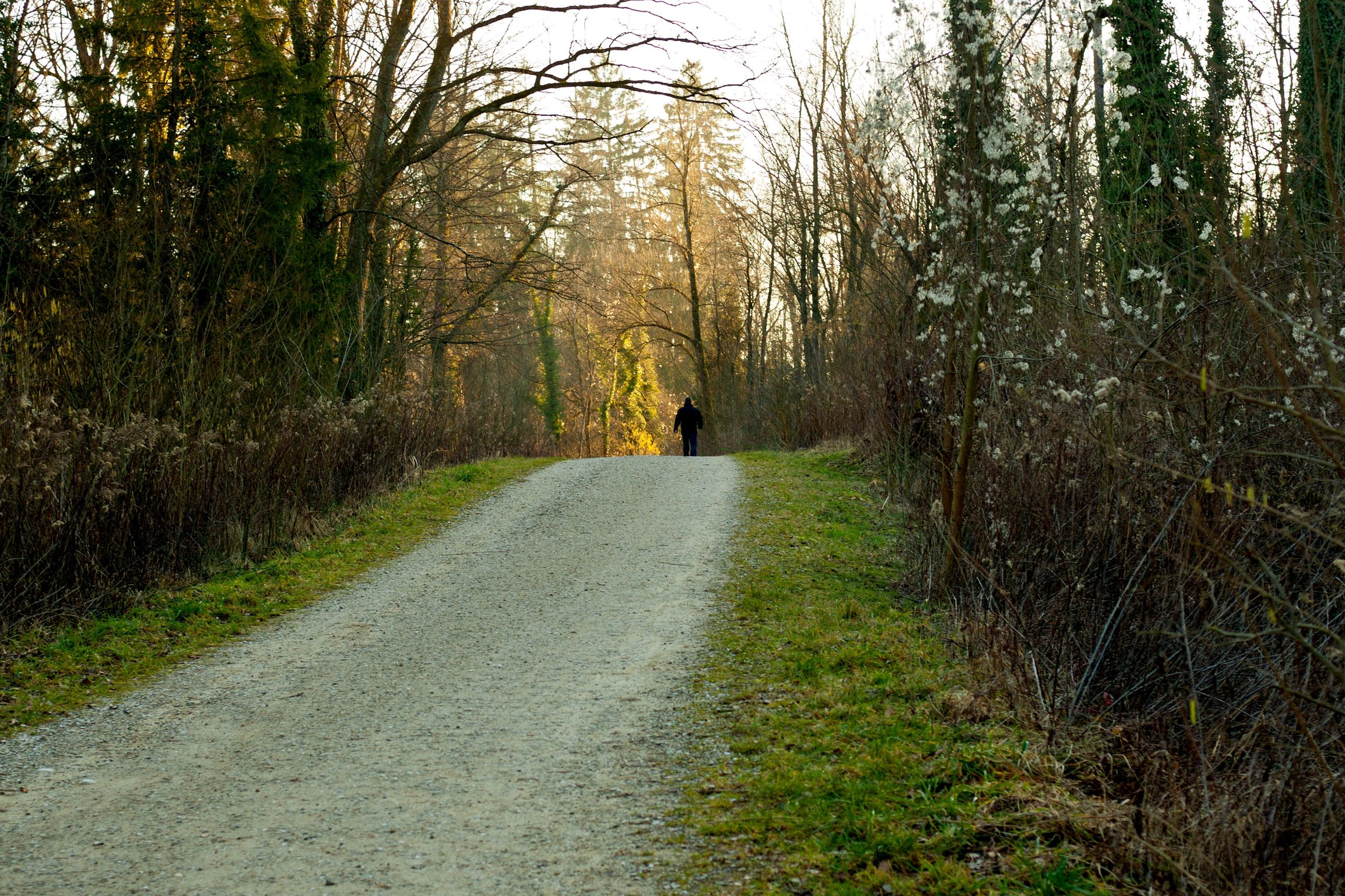 dog, road, one person, rear view, tree, one man only, the way forward, walking, full length, adventure, forest, single lane road, one animal, people, outdoors, adult, adults only, pets, nature, only men, day, grass, domestic animals, animal themes
