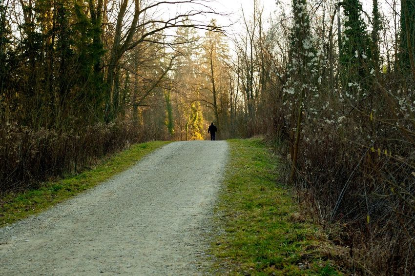 The Way Forward Road One Person Walking Tree Rear View Dog Forest Day Adventure Outdoors One Man Only