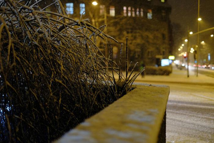 FUJIFILM X-T10 Close-up Fence Fujifilm Hay Bale Illuminated Live Fence Nature Night No People Outdoors Street Streetphotography Wasiak Shades Of Winter