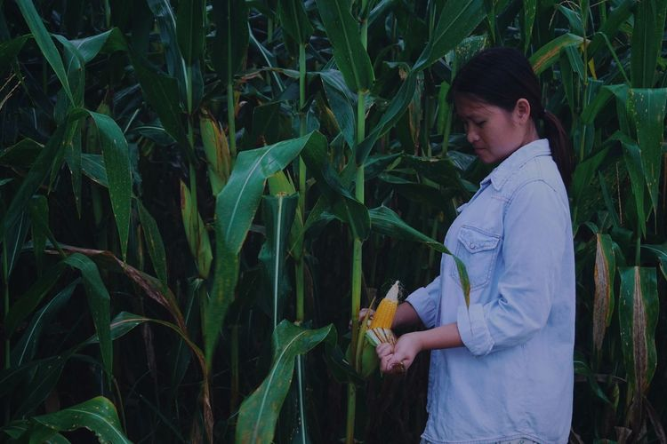 Side view of woman picking corn in farm